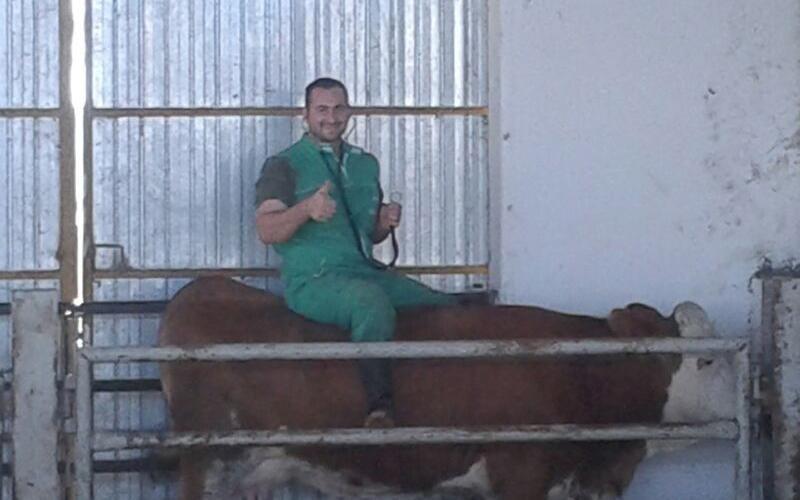 veterinario bovini