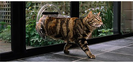 Cat walking through a glass door