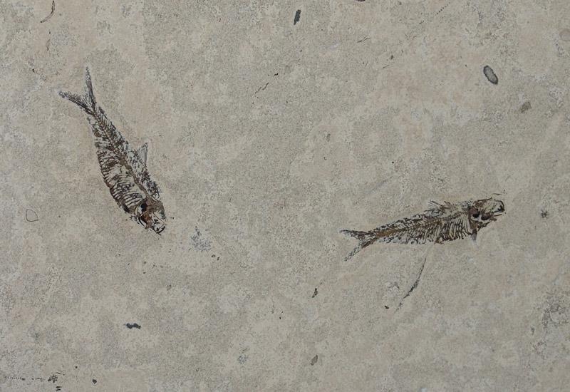 due pesci come decorazione su scale