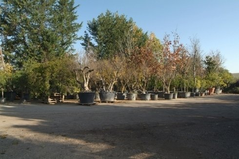 vendita alberi da giardino