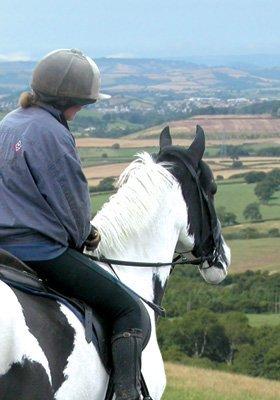 Saddle fitter - Halesworth, Suffolk - Juddpurs Saddlery - horse