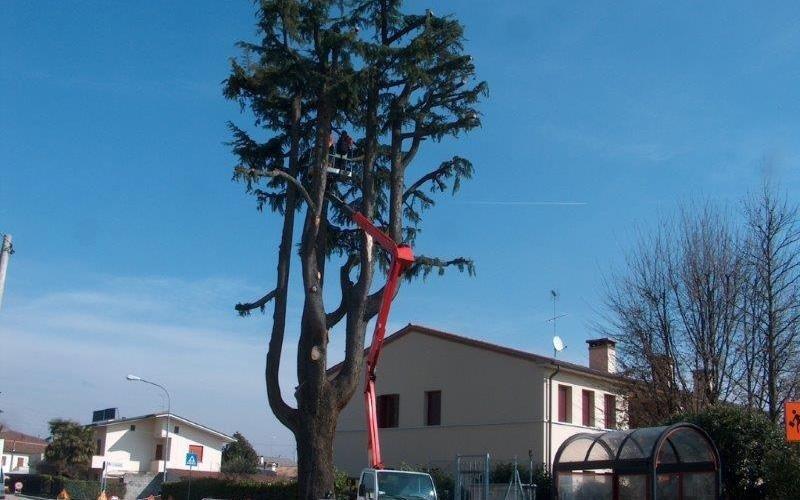 taglio albero con gru