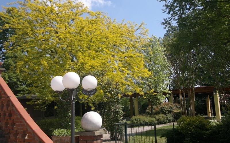 Vegetazione giardino - LA STALLA