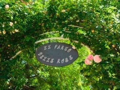 Roses in the park - LA STALLA