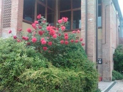 Rose garden - LA STALLA
