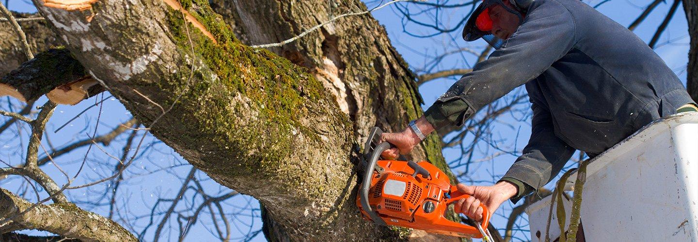 operaio mentre taglia albero