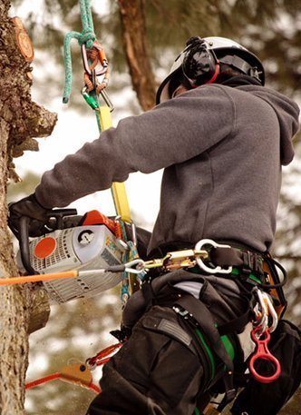 MPDT expert arborist working on a tree