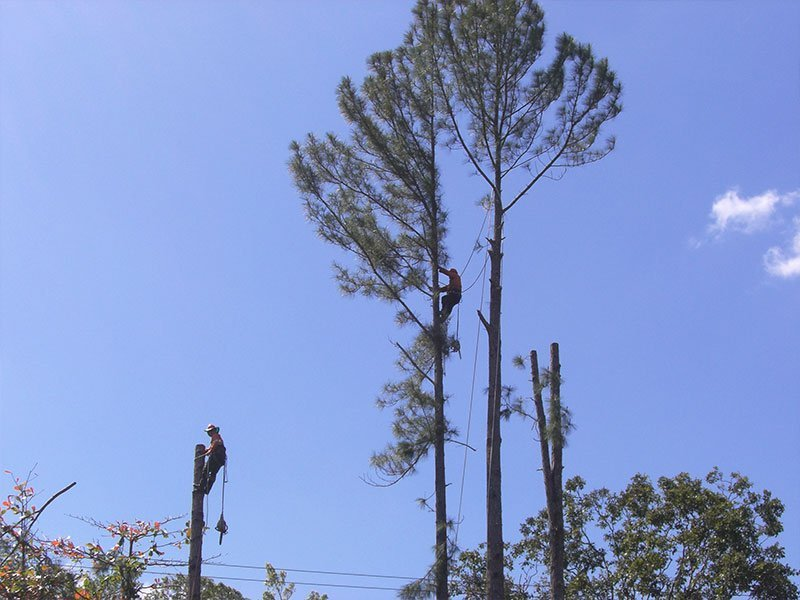 MPDT professional arborist working at a site