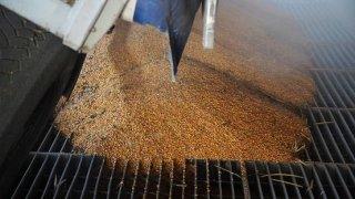 Calibrazione cereali