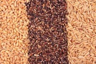 Essiccazione cereali