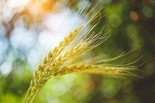 Conservazione cereali