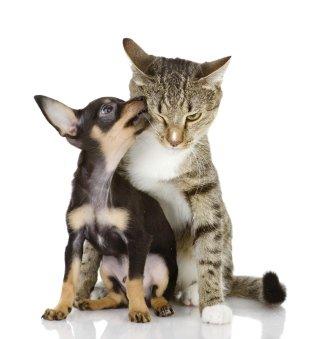 Farmaci veterinari, farmacia veterinaria, Borgorose, Corvaro, Rieti