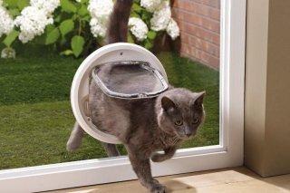 gatto che passa attraverso un' apertura nella porta