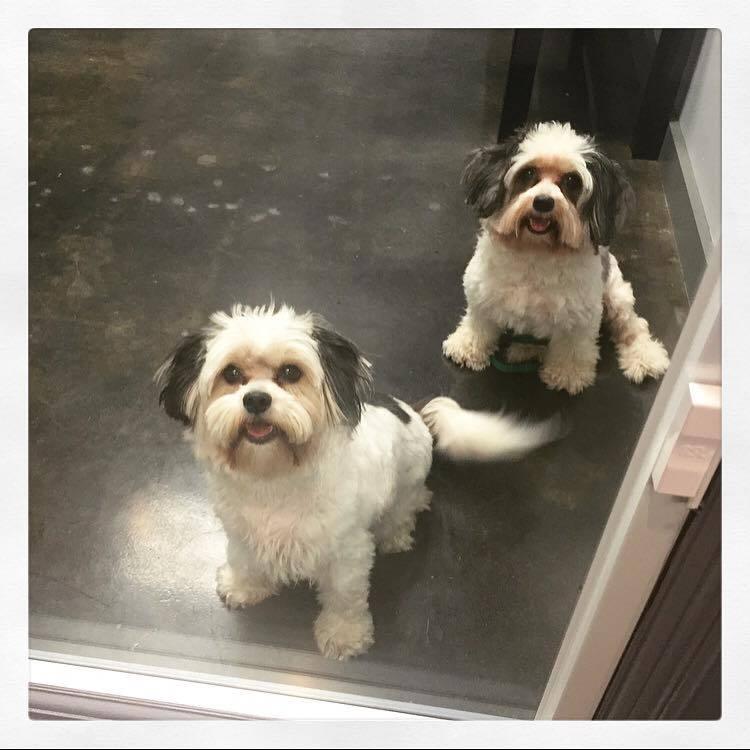 Veterinary Animal Clinic Houston Tx Pet Surgery