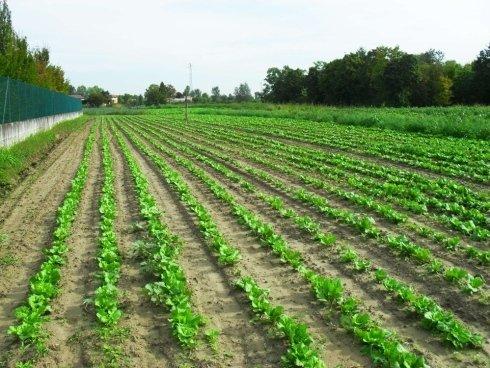 distesa di terra per coltivazione