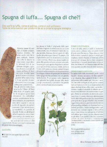 un paragrafo di una rivista che parla della spugna di luffa