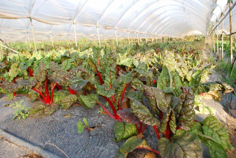 delle verdure con delle foglie e dei  gambi rossi
