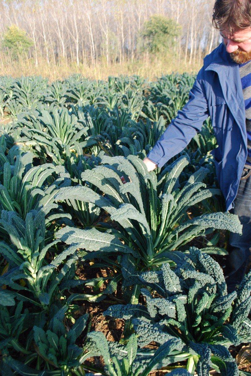 un uomo vicino a delle foglie di verdura