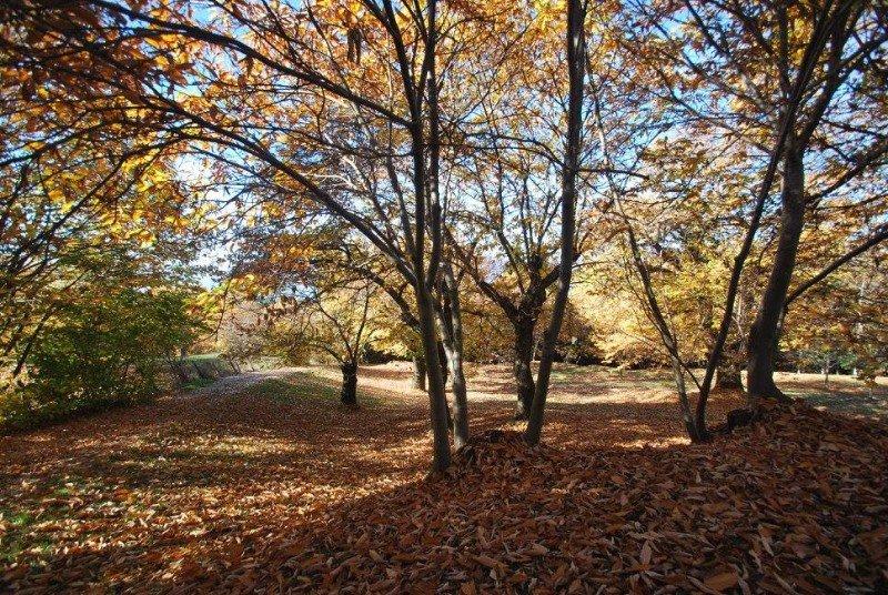 degli alberi e delle foglie secche a terra durante l'autunno
