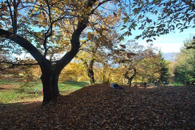 degli alberi e delle foglie secche a terra durante una giornata d'autunno