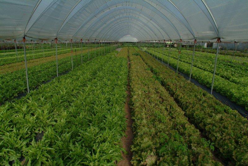 una serra con delle verdure