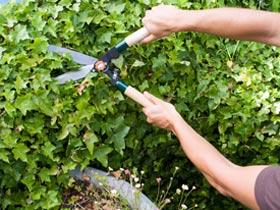 potatura piante, manutenzione aree verdi, pulizia parchi