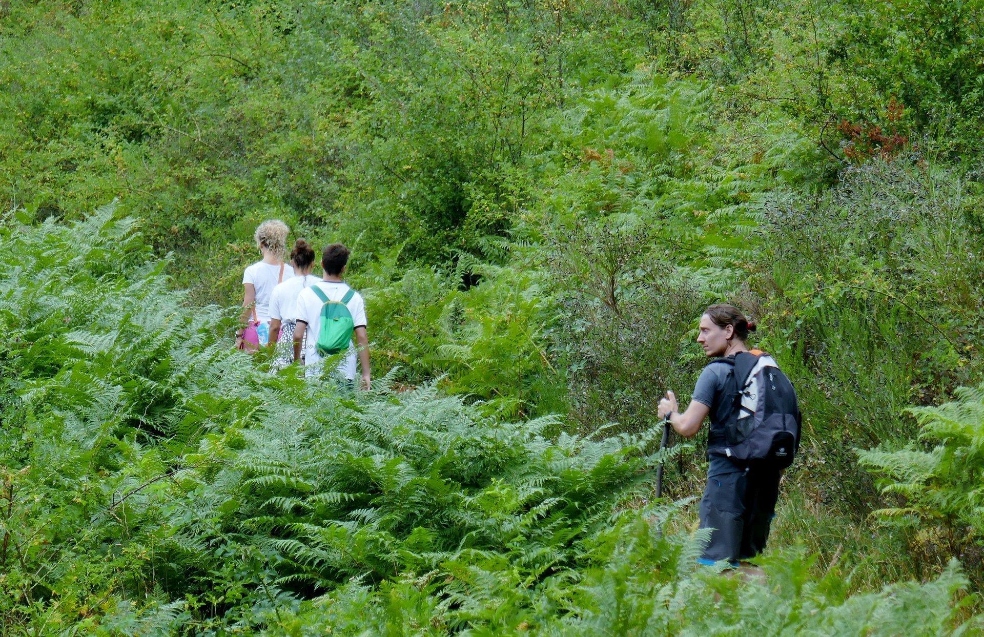 Escursioni nel verde bagno di romagna fc camping alto savio - Campeggio bagno di romagna ...
