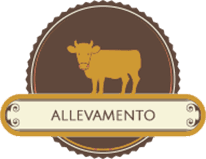 allevamento e vendita bestiame