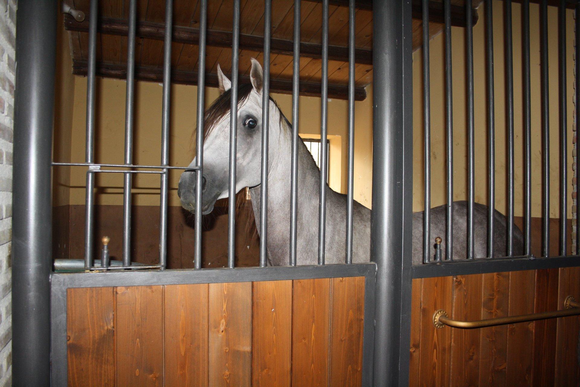 Agriturismo con cavalli Santo Stefano Quisquina