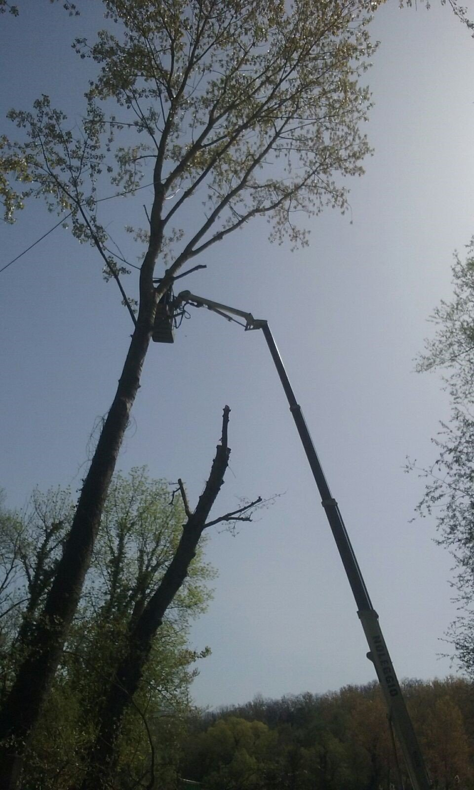 potature alberi alto fusto, piattaforme per potature alto fusto, rieti