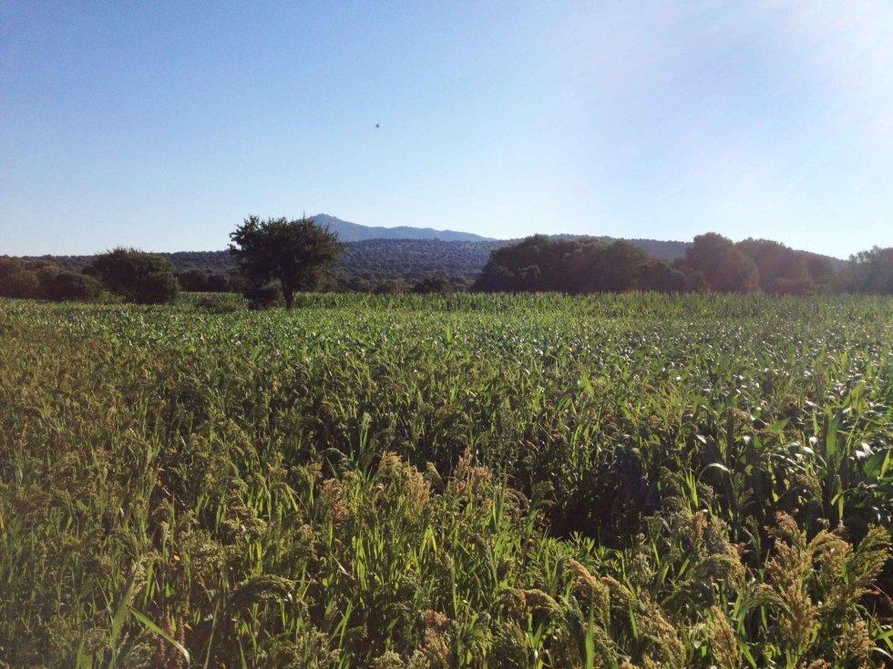 Alimenti di produzione biologica Dorgali