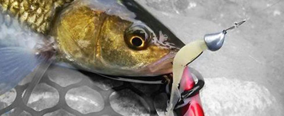 pesce pescato all'amo