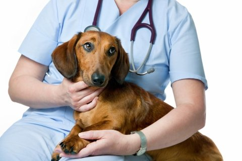 day hospital veterinario