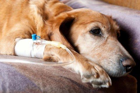 chirurgia ortopedica veterinaria