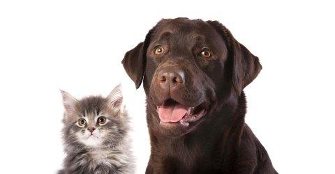 cura animali domestici