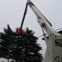 abbattimenti alberi piattaforma