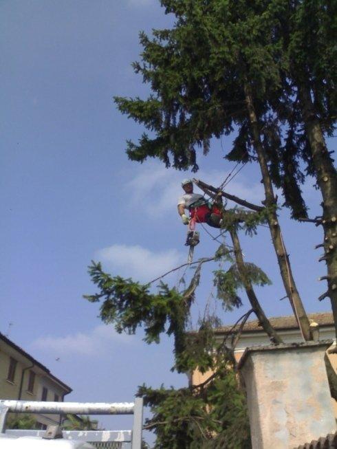 potatura e abbattimento in tree climbing
