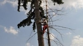 potatura tree climbing