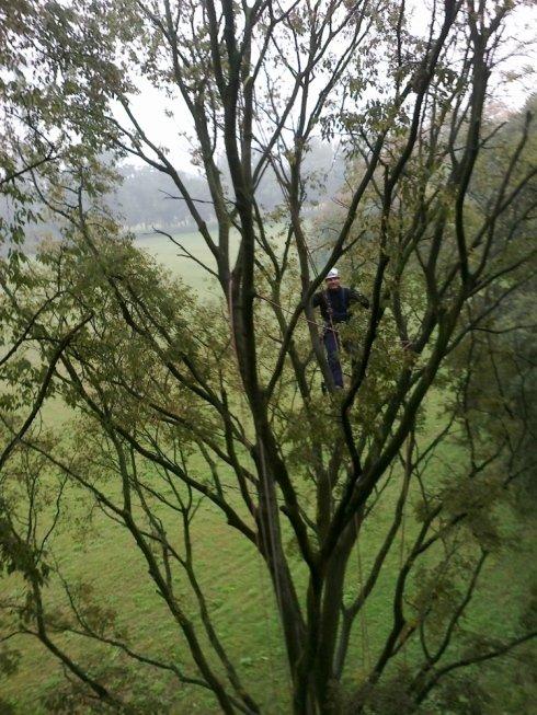 servizio di potatura in tree climbing