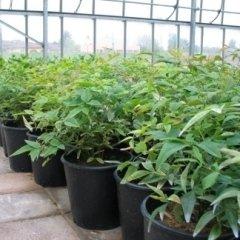 viavaio piante vaso