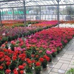 coltivazione piante fiore