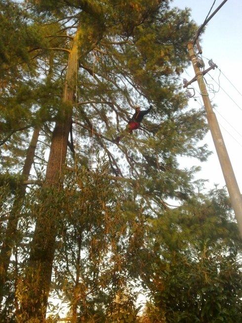 pulizia del secco in tree climbing