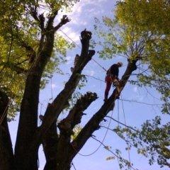 abbattimenti alberi alto fusto