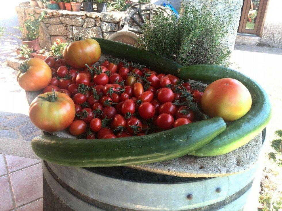 produzione verdure agriturismo