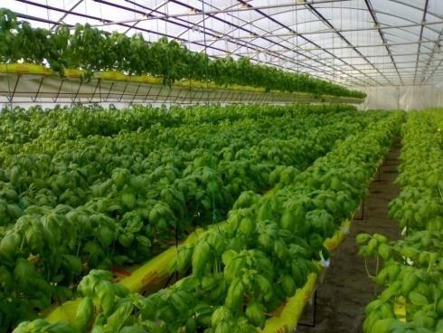 Irrigazione automatica longiano forl cesena irri for Irrigazione serra