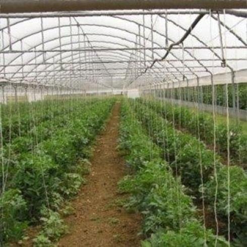 Irrigazione a goccia longiano forl cesena irri sistemi for Irrigazione serra