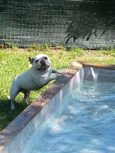cane di piccola taglia che vuole entrare in una vasca piena di acqua