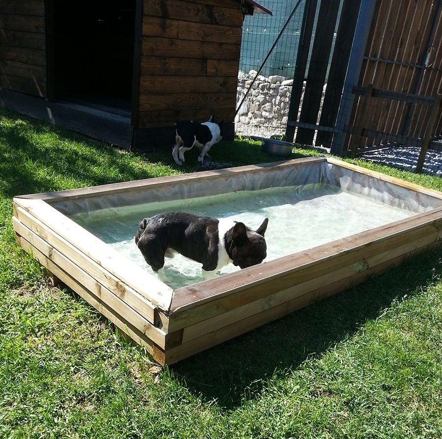 Cane nell'acqua