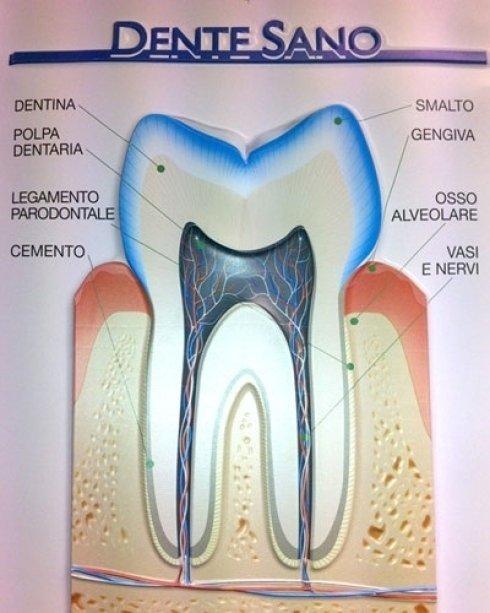 Quano un dente è in salute.