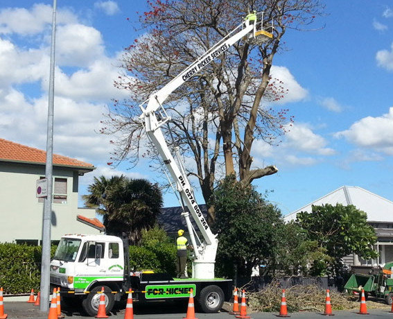One-stop tree felling services in the Bay of Plenty